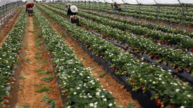La Junta de Andalucía triplica las ayudas para modernizar las explotaciones agrarias